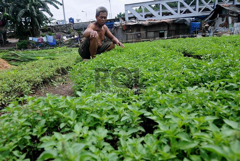 Penjualan petani sayur mengalami penurunan penjualan yang cukup signifikan karena rusak pasca terendam banjir.