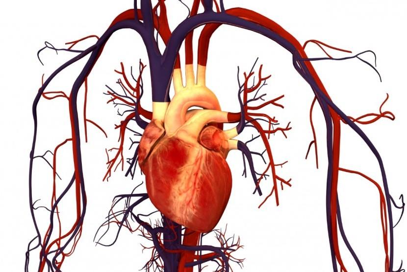 Penyakit jantung/ilustrasi