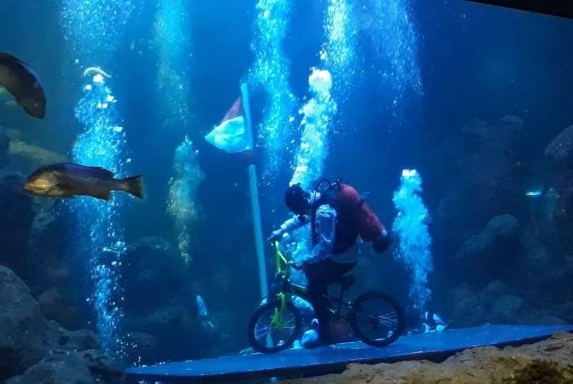 Penyelam melakukan atraksi gaya bebas dengan sepeda BMX di akuarium utama Seaworld Ancol, Jakarta.