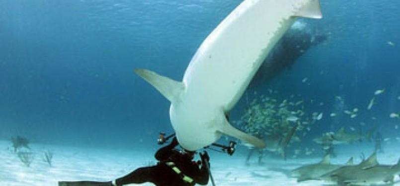 Penyelam nyaris jadi santapan hiu