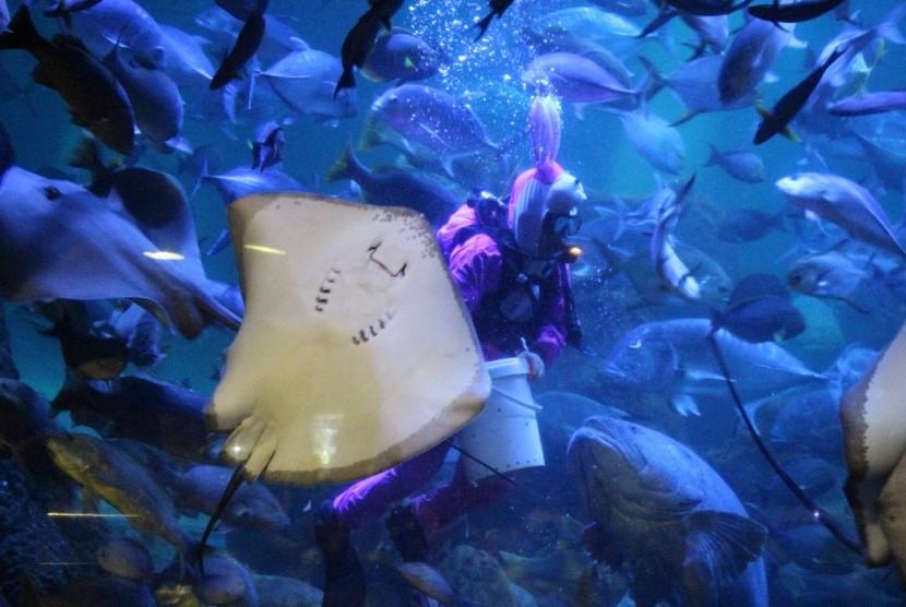 Penyelam Seaworld Ancol akan menyapa pengunjung dengan kostum kelinci.