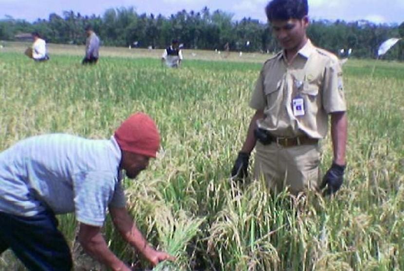 Penyuluh Pertanian