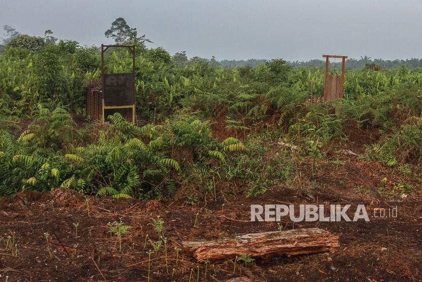 Perangkap yang dipasang petugas gabungan di area perlintasan harimau sumatra di kawasan Plangiran, Indragiri Hilir, Riau, Senin (19/3).