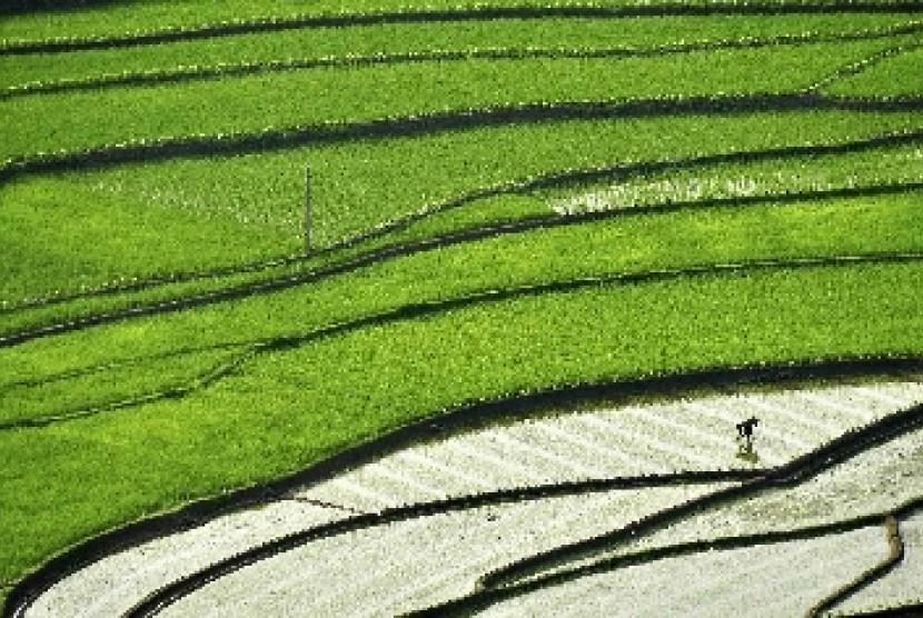 Catatan Gemilang Kinerja Sektor Pertanian Republika Online