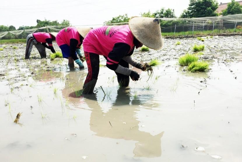 Petani Diharapkan Manfaatkan Informasi Iklim BMKG