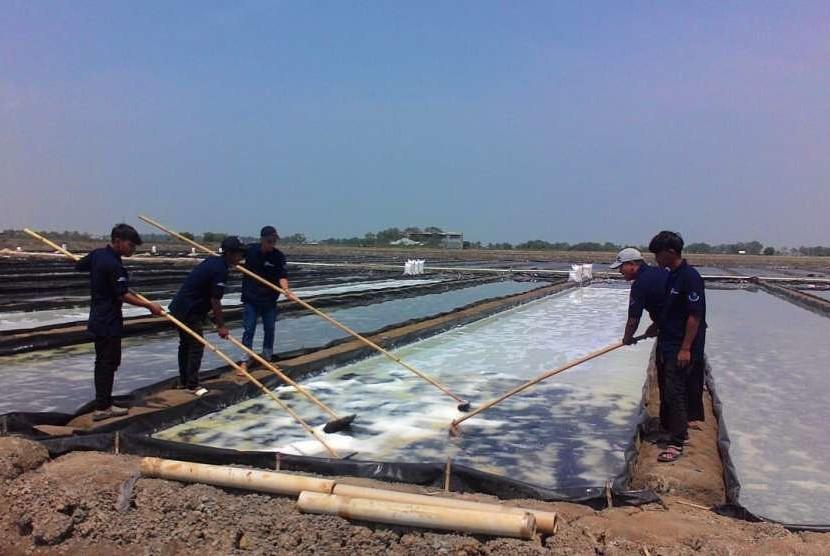 Petambak garam di lahan integrasi di Desa Pasir Jaya, Kecamatan Cilamaya Kulon, sedang memanen garam, Rabu (3/10).