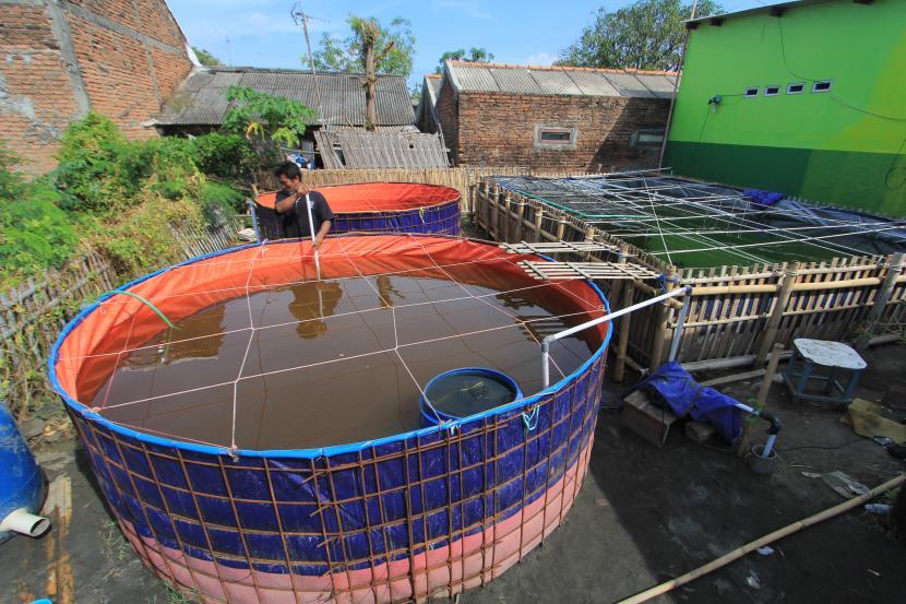 Petambak membersihkan kolam ikan sistem bioflok. ilustrasi
