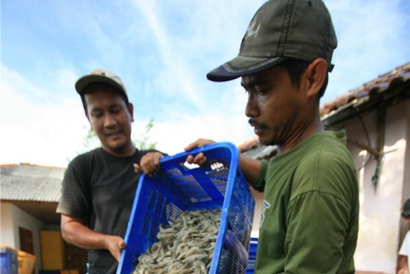 Petambak udang (ilustrasi)