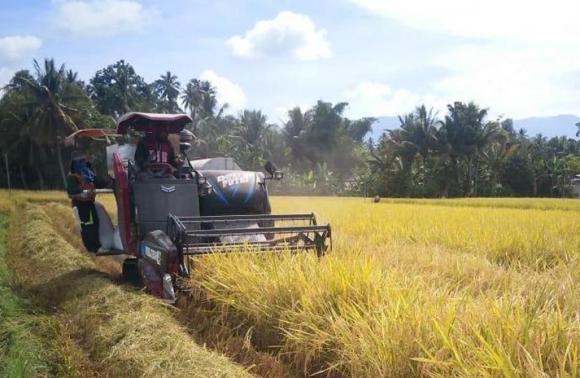 Petani Banten surplus padi saat panen raya.