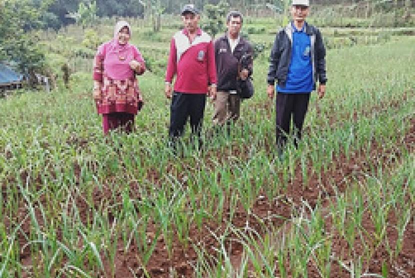 Petani bawang putih di Krucil Probolinggo