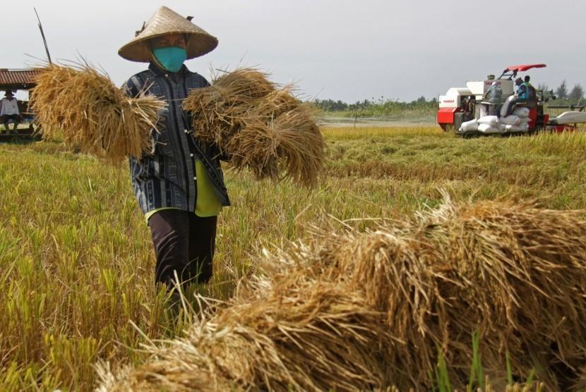 Petani bekerja di sawah.