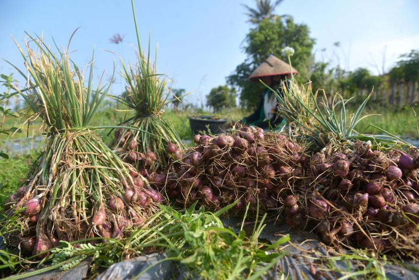 Petani bawang (ilustrasi)