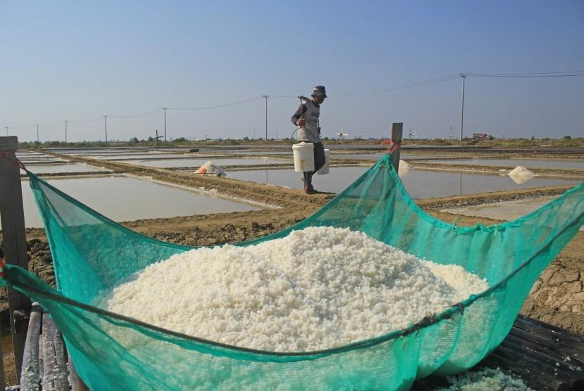Petani memanen garam di Losarang Indramayu, Jawa Barat, Kamis (1/8/2019).