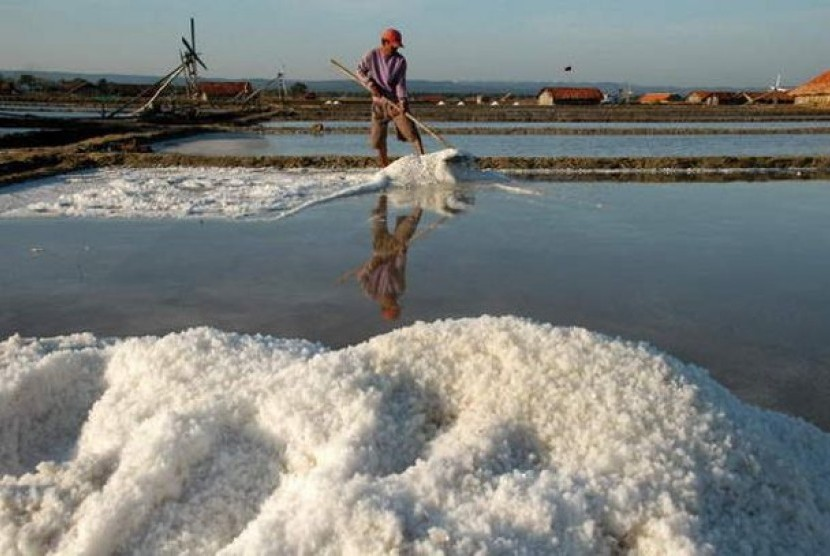 Petani memanen garam (ilustrasi)