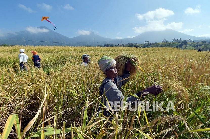 Petani memanen padi (ilustrasi). Komunitas Tani Mandiri Indonesia (KTMI) melaksanakan panen raya padi yang ditanam menggunakan teknologi bakteri.