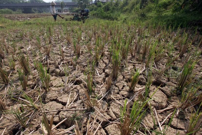 Petani membajak sawahnya yang mengalami kekeringan di Bogor.
