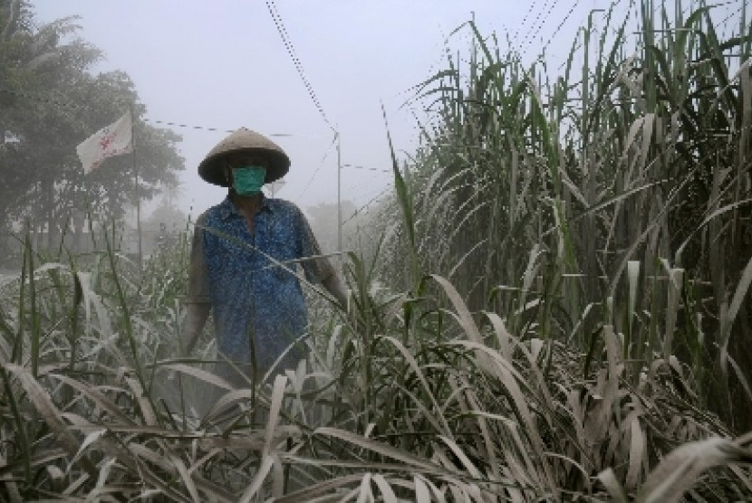 Petani memeriksa kebun tebu miliknya di kawasan Wates, Kulon Progo, Yogyakarta, Sabtu (15/2).