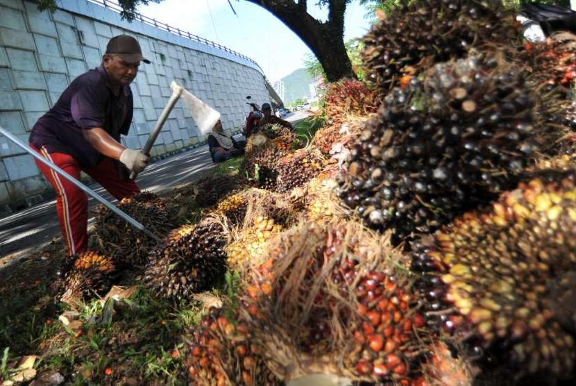 Palm farmer. (File photo)