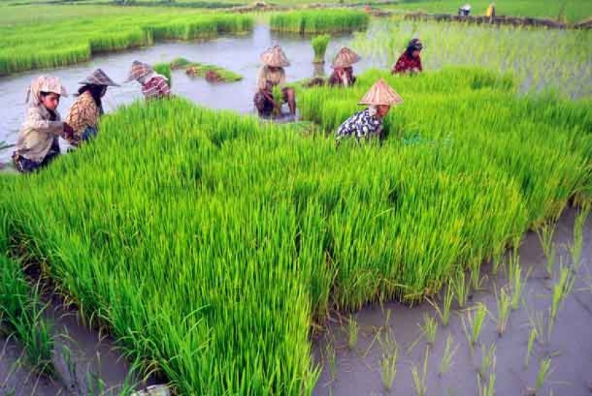 Sukabumi Cetak Ratusan Hektare Areal Persawahan Baru