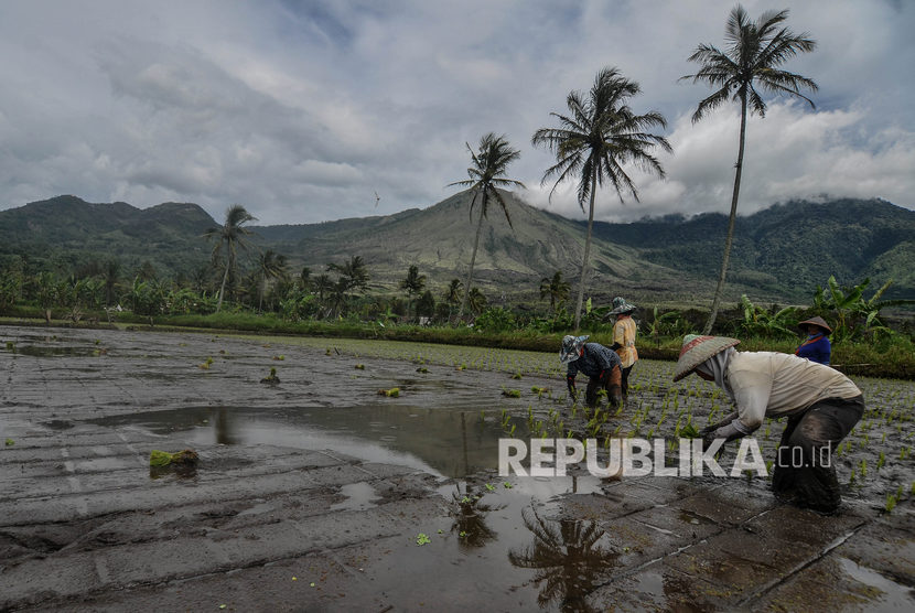 Petani menanam padi dengan latar belakang Gunung Guntur di Desa Rancabango, Kabupaten Garut, Jawa Barat, Kamis (5/3/2020).
