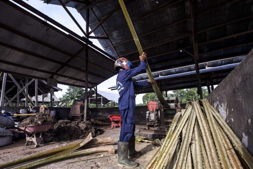 Petani mengolah pelepah sawit yang digunakan untuk pakan ternak sapi di Desa Pangkalan Tiga, Kabupaten Kotawaringin Barat, Kalimantan Tengah.