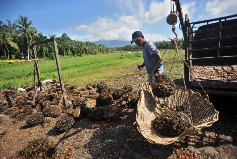 Petani menimbang kelapa sawit di Kinali, Pasaman Barat, Sumatra Barat, Sabtu (1/12/2018).