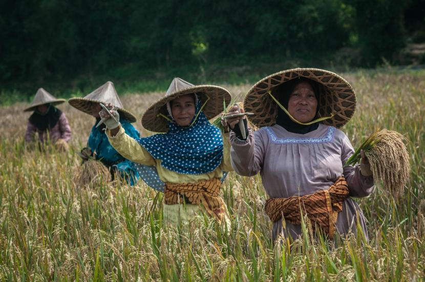 FAO: Produktivitas Pangan RI Harus Bisa Atasi Stunting. FAO: Produktivitas Pangan RI Harus Bisa Atasi Stunting