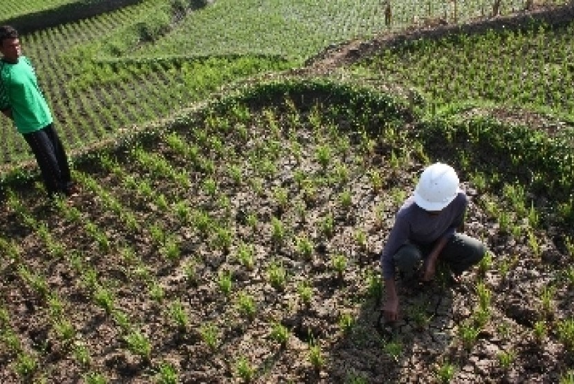 Petani mulai menanam padi di sawah (ilustrasi)
