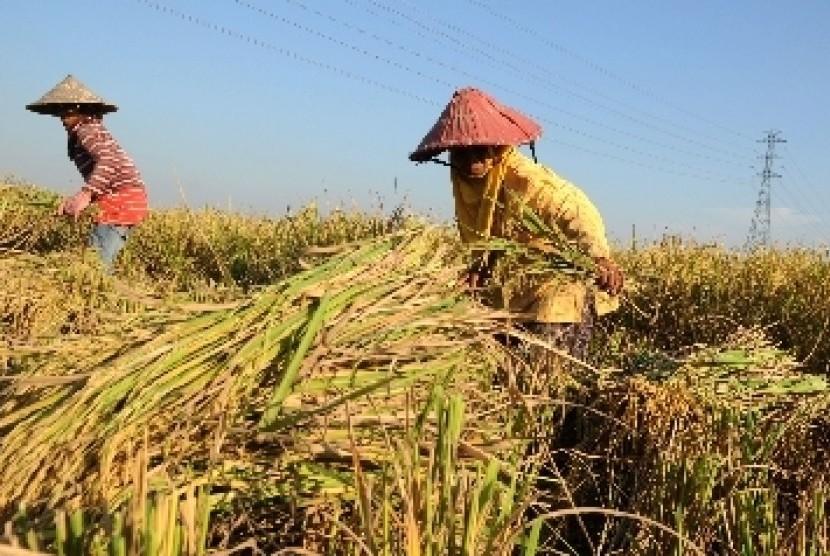 Profil Petugas Pengawas Mutu Hasil Pertanian Pmhp Republika Online