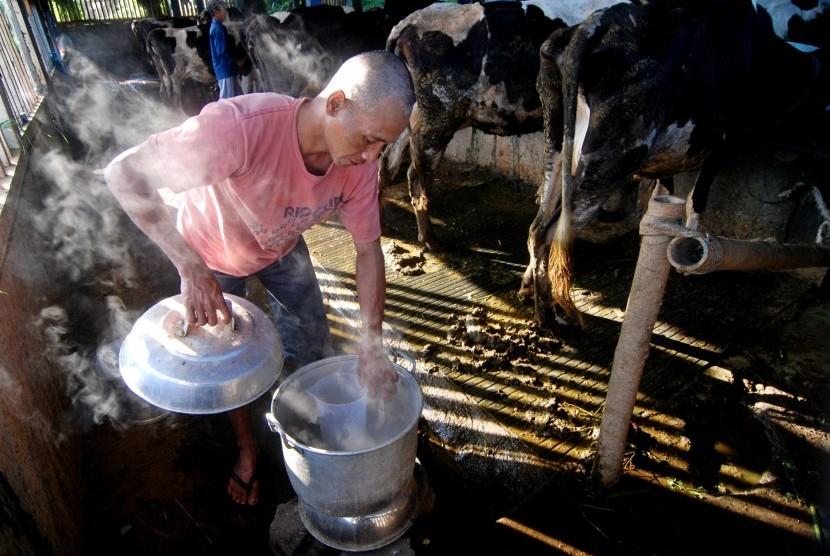 Peternak memanfaatkan energi biogas yang berasal dari kotoran sapi untuk memasak air perangsang keluarnya susu saat memerah di salah satu peternakan di Getasan, Kabupaten Semarang, Jawa Tengah, Senin (5/9).