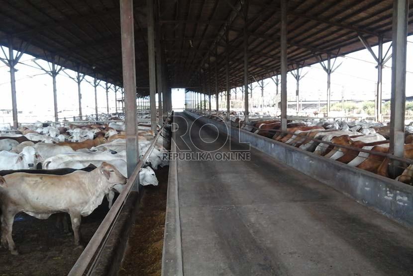 Peternakan dan penggemukan sapi milik grup Japfa Comfeed Indonesia di Lampung (ilustrasi).
