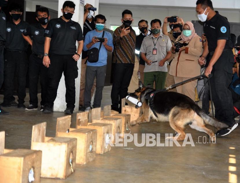 Petugas Badan Narkotika Nasional (BNN) menggunakan anjing pelacak K-9 untuk menemukan keberadaan narkotika saat simulasi di gedung fasilitas anjing pelacak narkotika (Unit Deteksi K-9) BNN, Lido, Kabupaten Bogor, Jawa Barat, Senin (7/9/2020). Unit Deteksi K-9 bertugas membantu BNN dalam mengungkap tindak pidana peredaran narkotika di Indonesia.