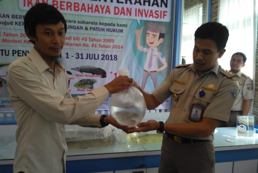 Petugas BKIPM Kelas II Semarang menerima penyerahan ikan berbahaya dan bukan berhabitat aski Indonesia dari masyarakat.