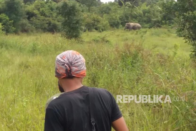 Operasi mengatasi serangan gajah liar yang menyerang kebun dan pemukiman warga. (ilustrasi)