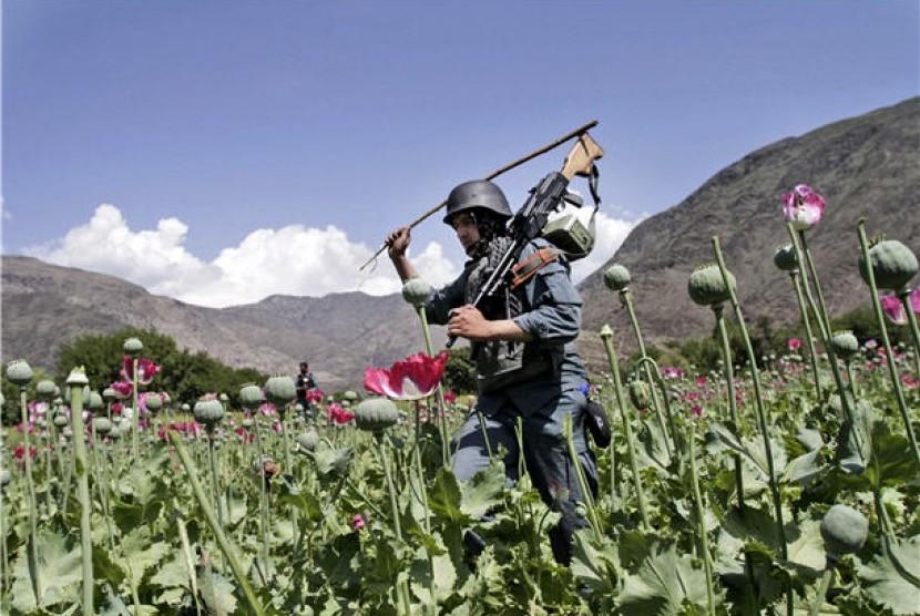 Petugas keamanan Afghanistan menghancurkan ladang opium di Noorgal, Provinsi Kunar, Afghanistan.