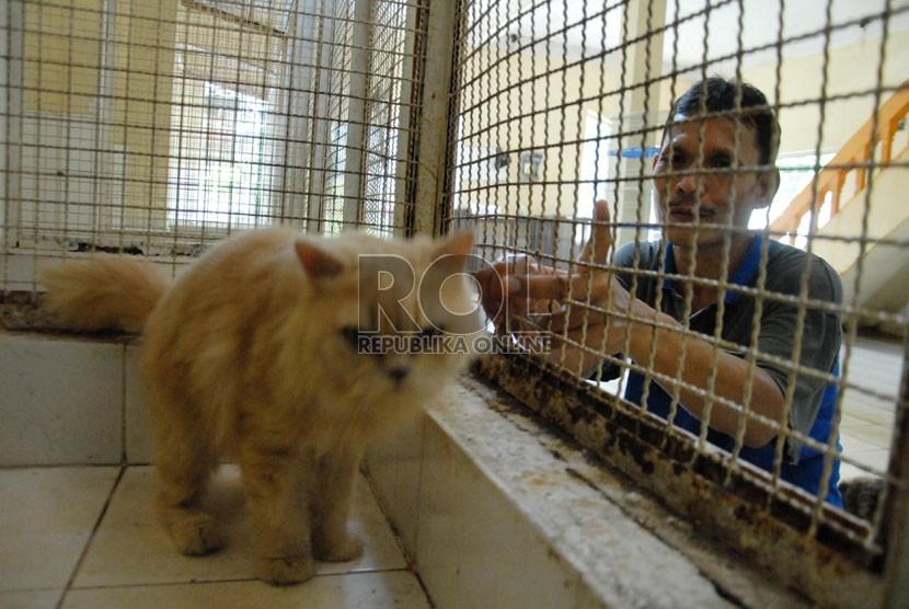 6100 Gambar Cerita Hewan Kucing Terbaru