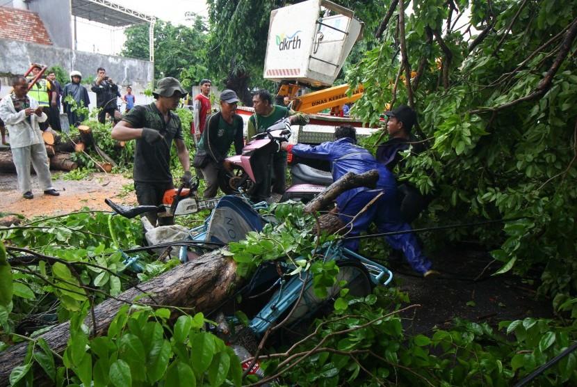 Ilustrasi pohon tumbang menimpa sepeda motor di Surabaya, Jawa Timur.