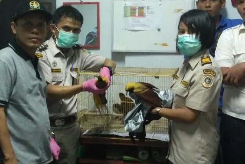 BKSDA Sita Ribuan Burung Dilindungi yang akan Diselundupkan
