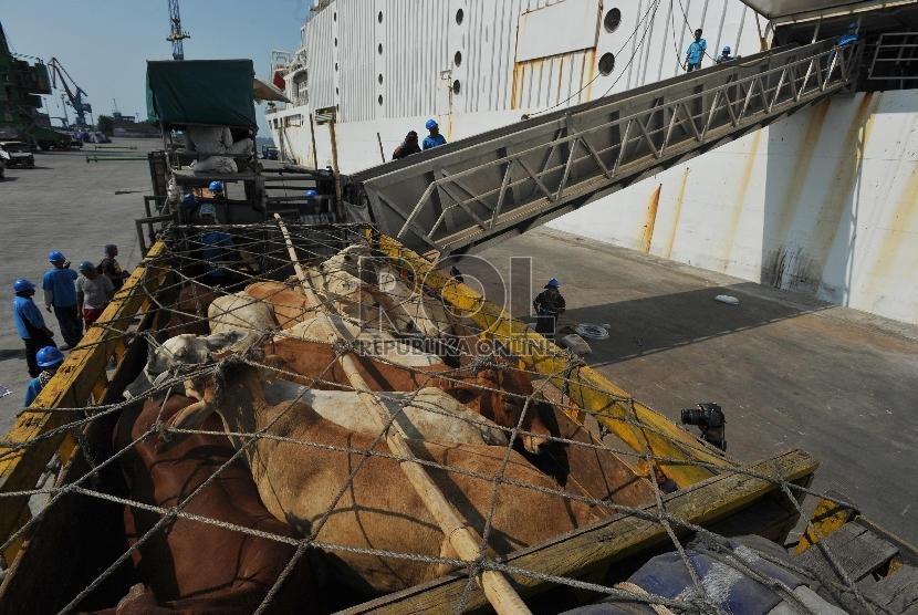 Petugas menurunkan sapi impor asal australia di Pelabuhan Tanjung Priok, Rabu (2/9).