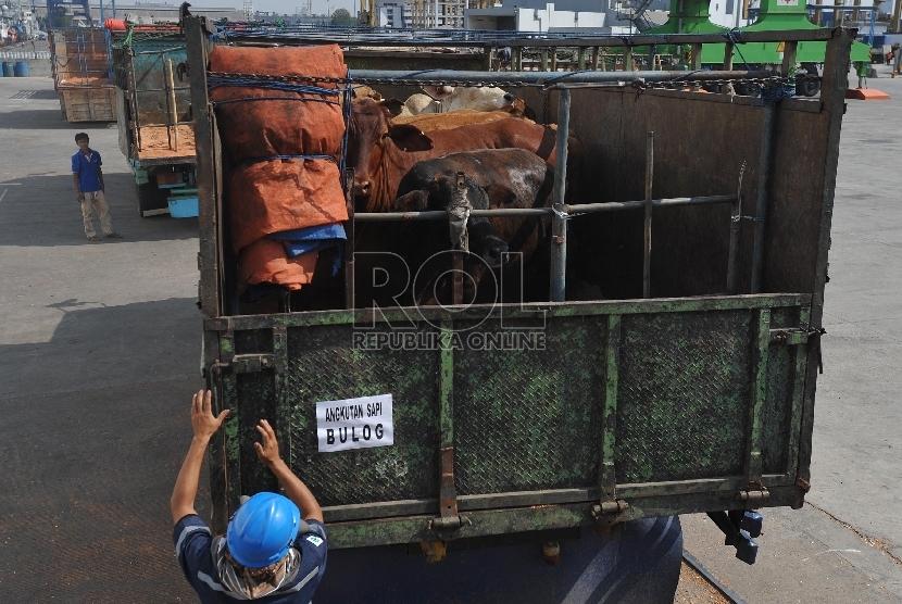 Petugas menurunkan sapi impor asal australia di Pelabuhan Tanjung Priok, Rabu (2/9).Republika/Edwin Dwi Putranto