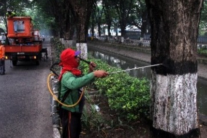 Petugas menyemprotkan insektisida untuk mencegah penyebaran ulat bulu.