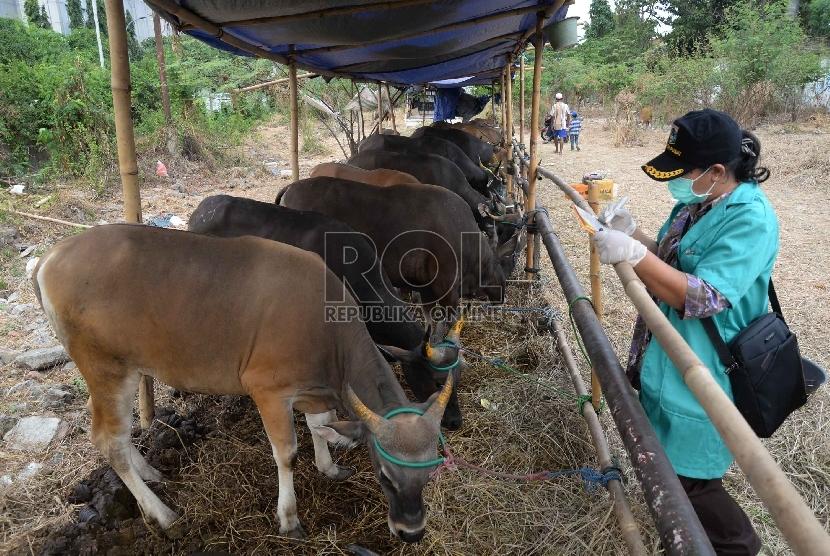 Petugas Suku Dinas Pertanian dan Peternakan Jakarta Pusat melakukan pemeriksaan kesehatan hewan kurban di kawasan Tanah Abang, Kamis (10/9).  (Republika/Yasin Habibi)