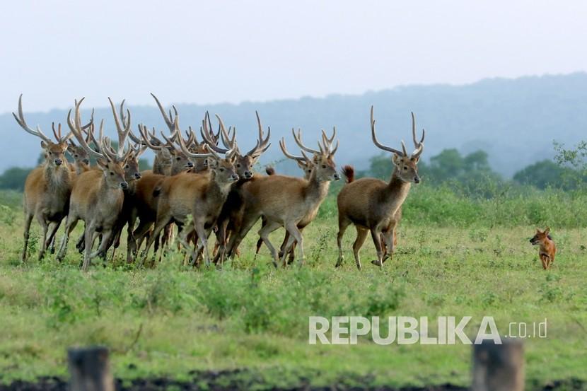 Menparekraf Anggarkan Rp 60 Miliar untuk Wisata Situbondo (ilustrasi).