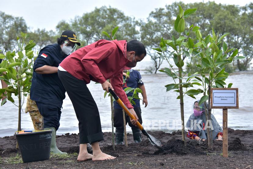 Presiden Joko Widodo (kanan) didampingi Menteri Lingkungan Hidup dan Kehutanan Siti Nurbaya melakukan penanaman mangrove di kawasan wisata Raja Kecik, Desa Muntai Barat, Kecamatan Bantan, Kabupaten Bengkalis, Riau, Selasa (28/9/2021).