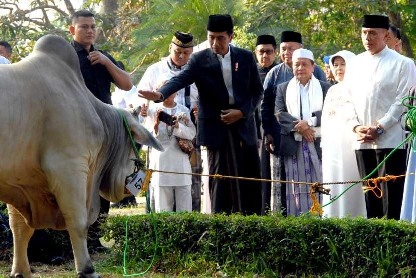 Presiden Joko Widodo (ketiga kiri) memberikan seekor sapi kepada pengurus masjid Baitul Faidzin, Cibinong, Kabupaten Bogor, Jawa Barat, Rabu (22/8). Pada Idul Adha 1439 H tahun ini, Presiden Jokowi memberikan satu ekor sapi kurban jenis peranakan Ongol dengan bobot 1,3 ton.
