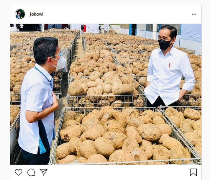 Jokowi Sampaikan Komitmen RI Hadapi Situasi Darurat Energi. Foto: Presiden Jokowi mengatakan anaman porang sekarang menjadi sorotan karena rencananya akan menjadi komoditas ekspor andalan baru Indonesia.