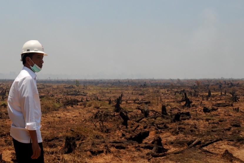 Presiden Jokowi tinjau lahan yang terbakar.