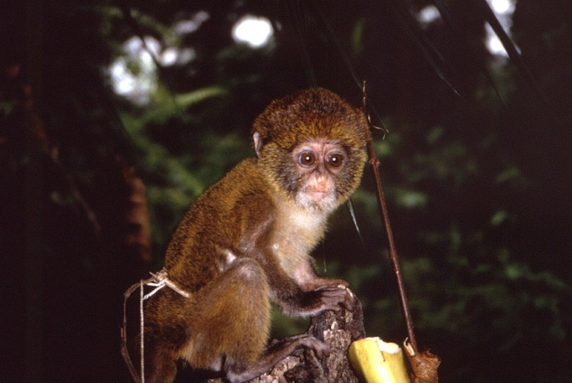Primates can transmit monkeypox to humans.