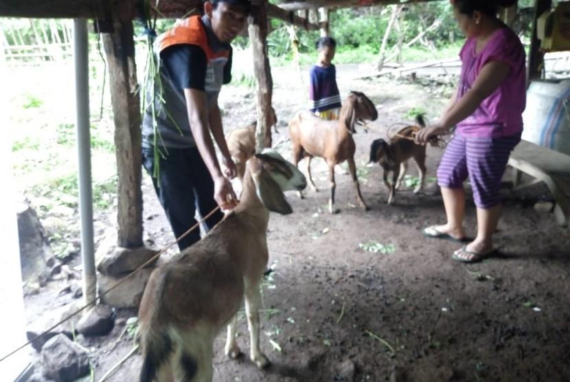 Program Peternak Berdaya yang dilaksanakan di Dusun Balang Papa Desa Timbuseng Kec. Pattallassang Kab. Gowa.