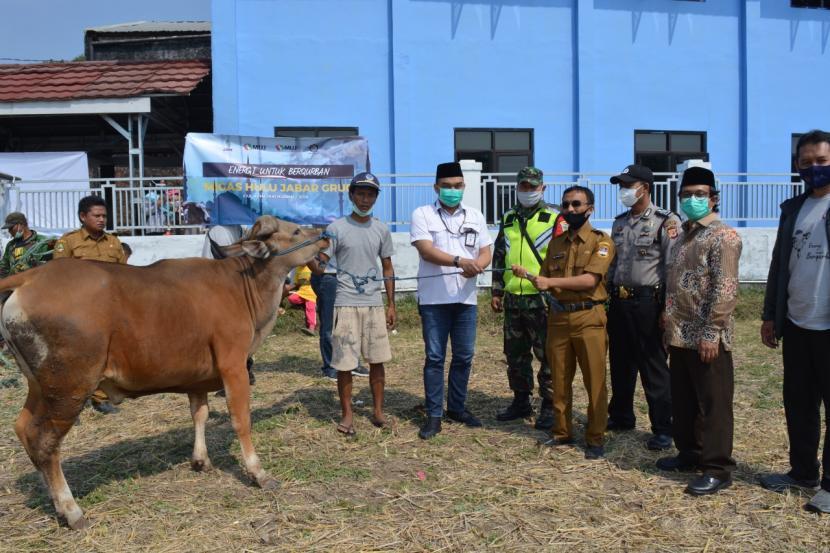BUMD MUJ Grup Donasikan Bantuan 20 Ekor Sapi Qurban